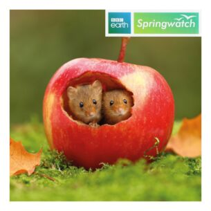 Springwatch – Harvest Mice Greeting Card